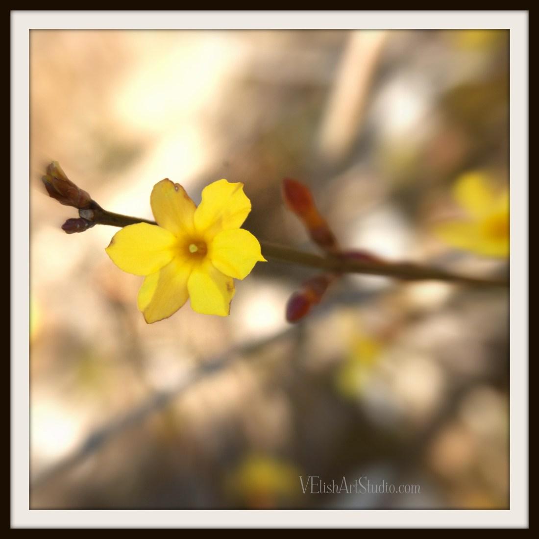 _IGP9016.JPG_15 12x12 single flower